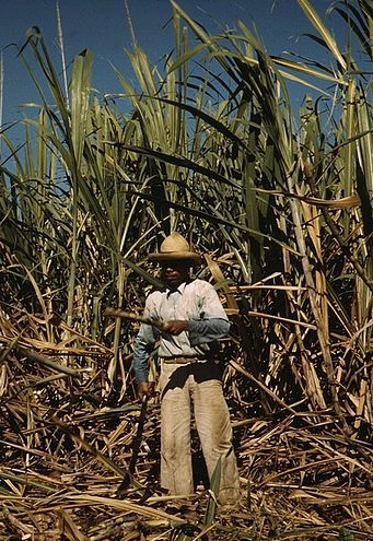 Sugar cane worker in Puerto Rico, circa 1942