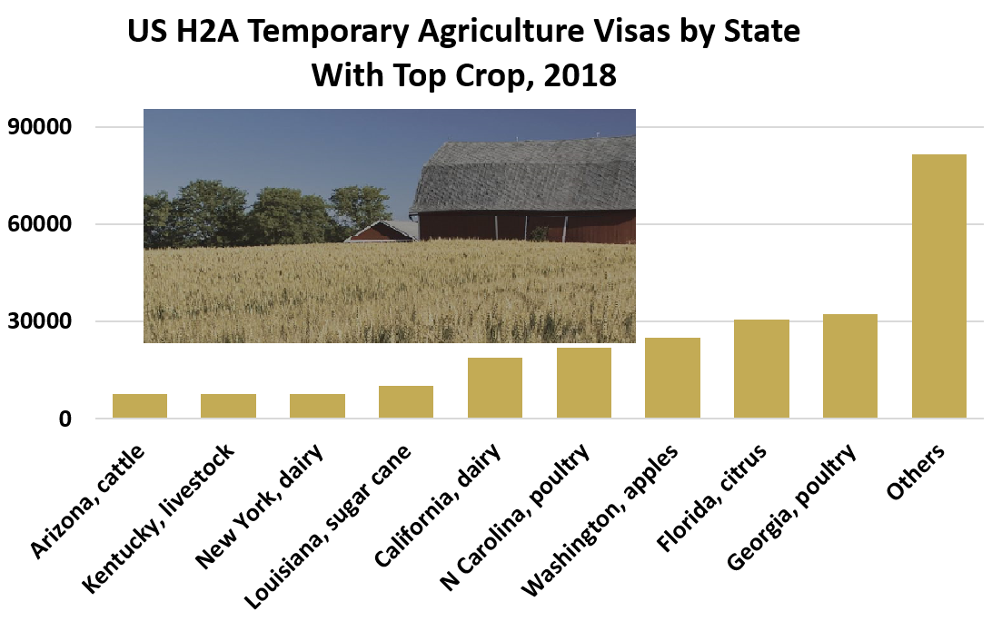 US H2A Temporary Agriculture Visas by State With Top Crop, 2018:  Arizona, cattle	7497; Kentucky, livestock 7604,  New York, dairy	7634 Louisiana, sugar cane	10079 California, dairy	18908 N Carolina, poultry	21794 Washington, apples 24862 Florida, citrus 30462 Georgia, poultry 32364, Others	81558