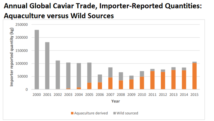 Global caviar totals from WWF showing aquaculture excees wild-caught caviar